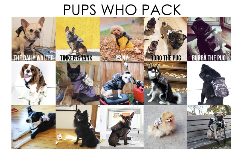 Modena Pups Who Pack9